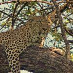 Kenia Urlaub - Landschaft und Wildtiere hautnah