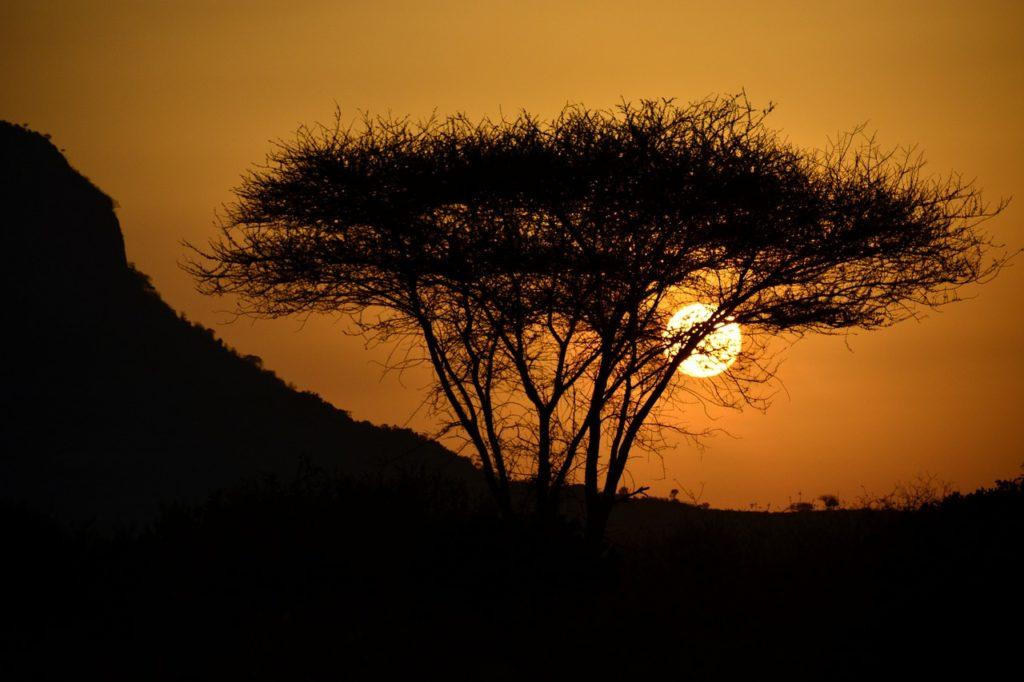 Kenia Urlaub: Weite Landschaft und Wildtiere hautnah