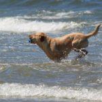 Urlaub mit Hund - viele tolle Angebote in Deutschland