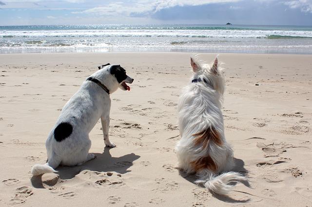 Urlaub mit Hund am Bodensee erleben