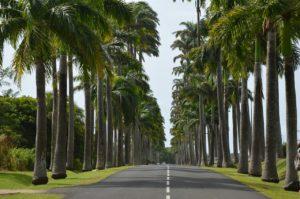 Guadeloupe Palmen Straße