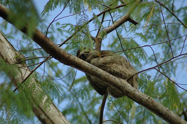 Costa Rica Flora und Fauna