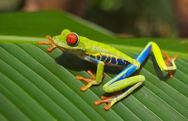 Giftige Schlangen, bunte Fröschen und faszinierende Reptilien