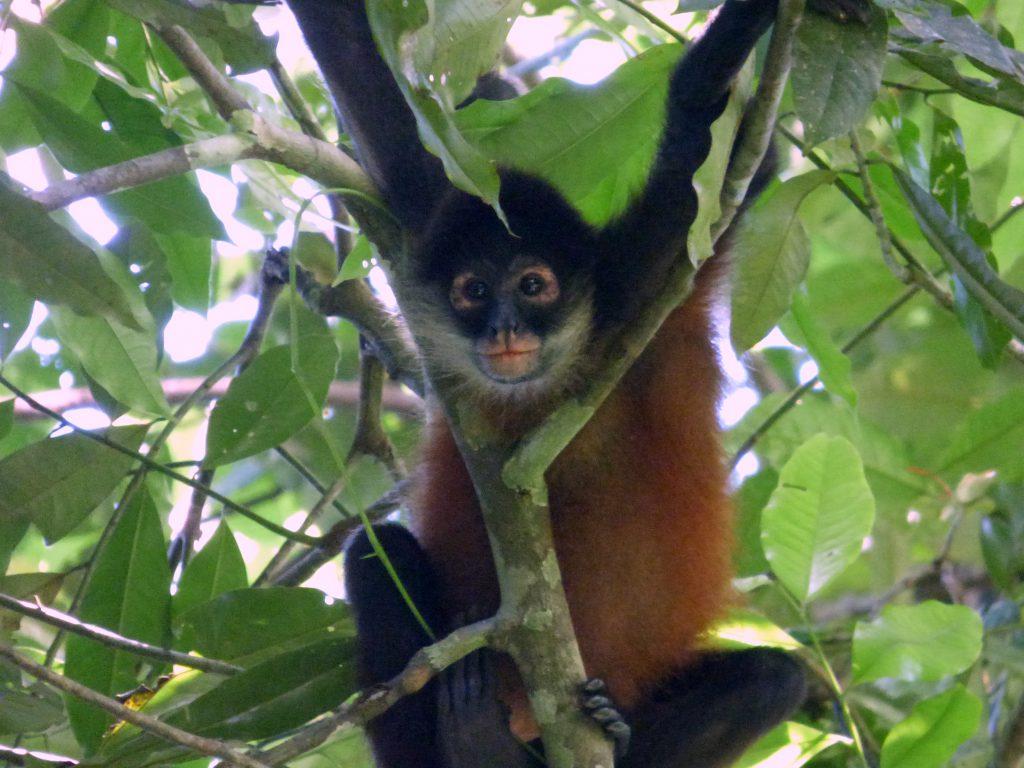 © Mona Otten | Corcovado Nationalpark
