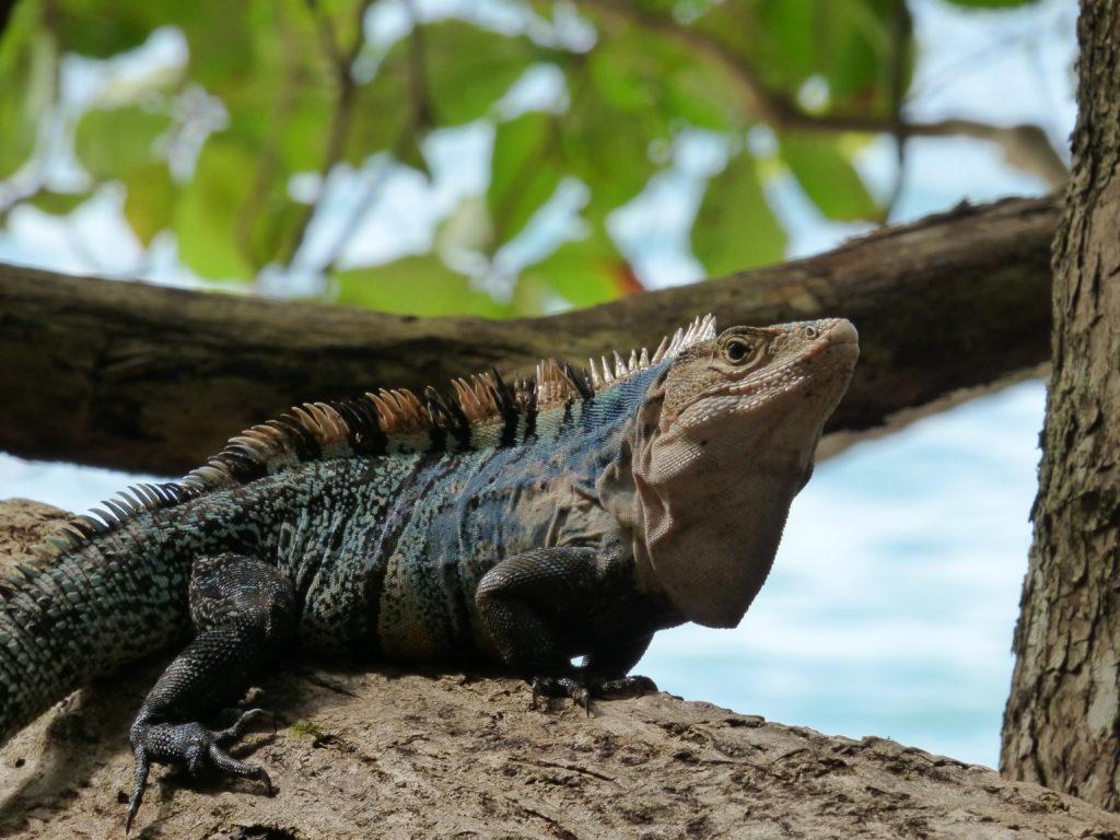 © Mona Otten | Manuel Antonio Nationalpark