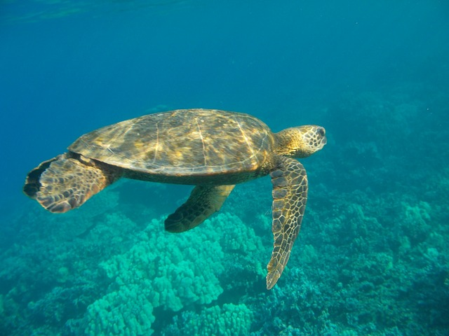 Unbeschwertes Schnorcheln auf den Seychellen