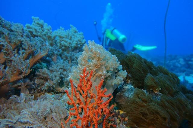 Tauch- und Schnorchelparadies Seychellen